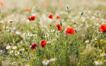 5 fiori per la cosmesi naturale fai da te