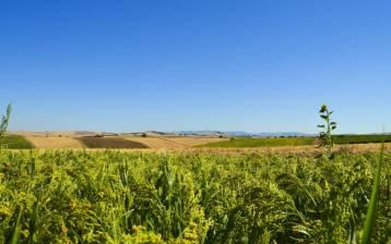 Sempre più italiani scelgono le bevande vegetali