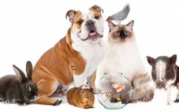 Benessere naturale per gli animali