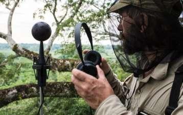 Stiamo perdendo i suoni della nostra preistoria. Il degrado delle foreste in Amazzonia e Africa