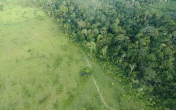 SOS AMAZZONIA Benefit Festival